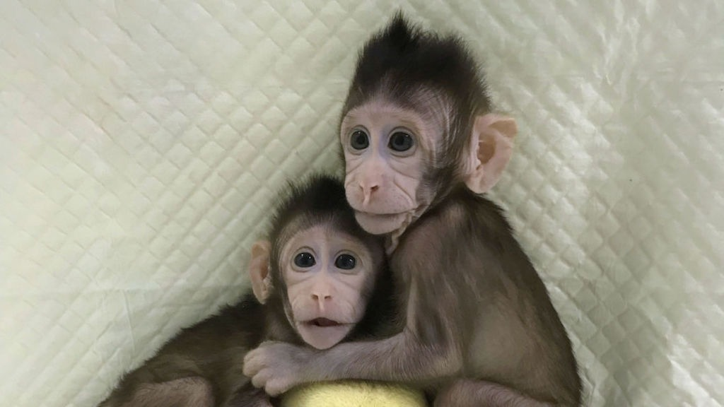 China Successfully Clones Monkeys; Are Humans Next?