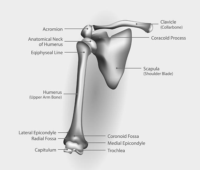Yoga Anatomy Reducing Shoulder Impingement