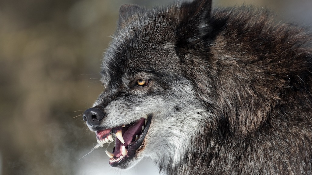 Is Skinwalker Ranch Home to an Unearthly Dire Wolf?