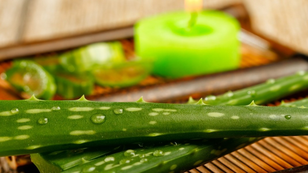 5 Ways Aloe Heals the Body and the Belly