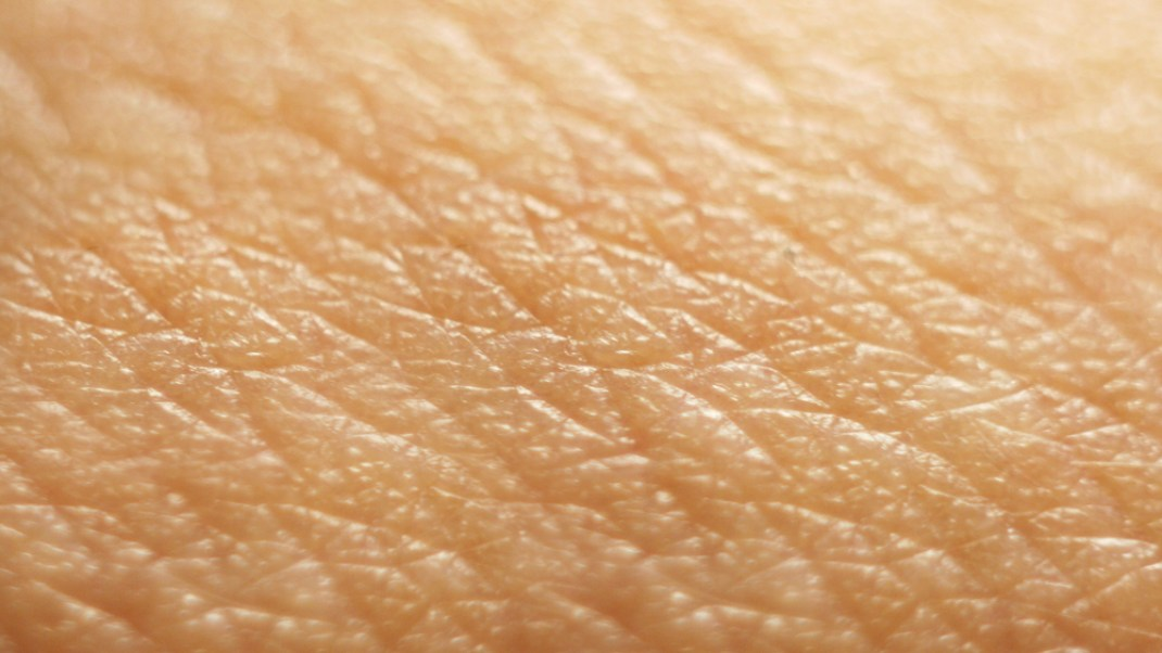 Structure, Function and Care of Human Skin
