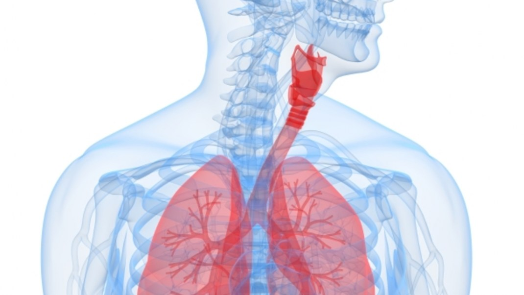 The Anatomy of Pranayama: Understanding Our Breath