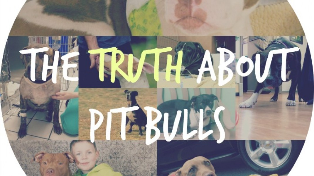 These 10 hero pit bulls stopped at nothing to save their humans