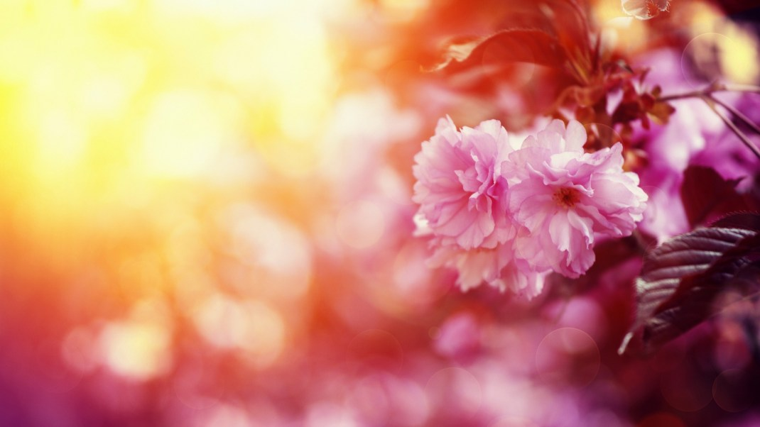 Vernal Equinox: Ritual Through Yoga