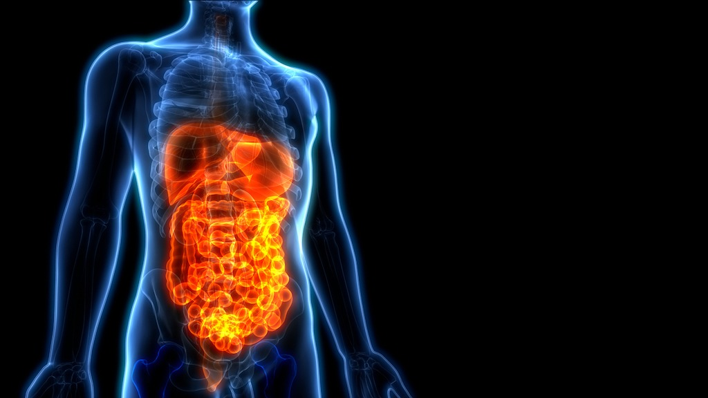 How to Improve Your Second Brain: Your Gut