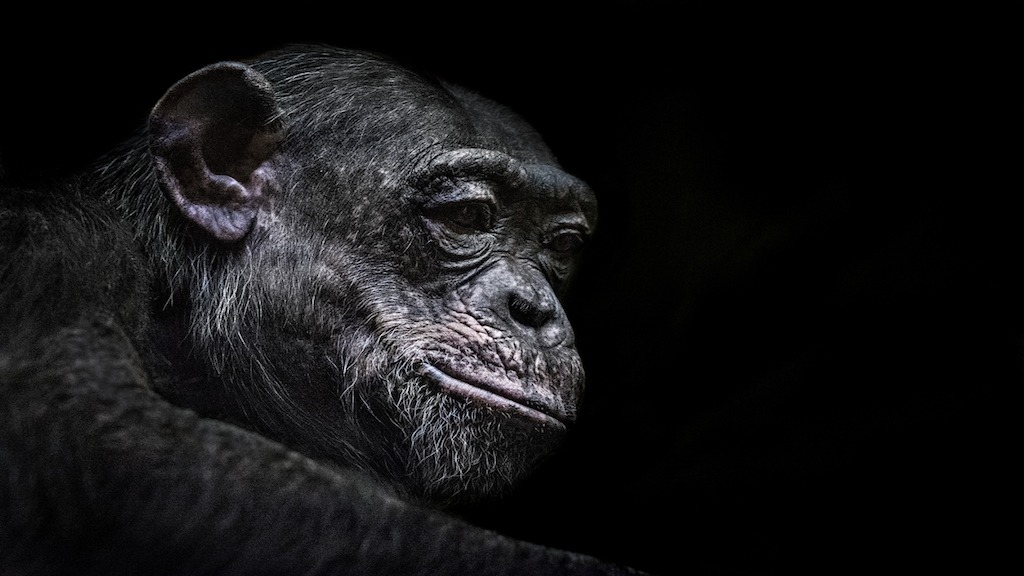 Scientists Just Inserted a Human Intelligence Gene Into Monkeys