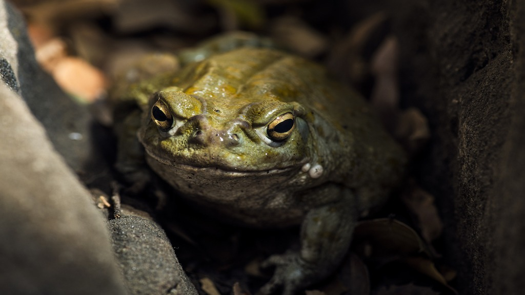Psychedelic Toad Medicine; DMT and the Eternal Consciousness