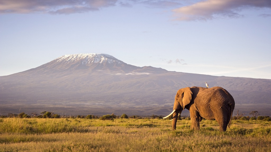 Were Elephants Engineered As Living Metaphors of Grace And Patience?