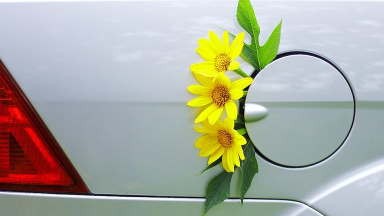 Mini sunflowers are filling up the car with green power.