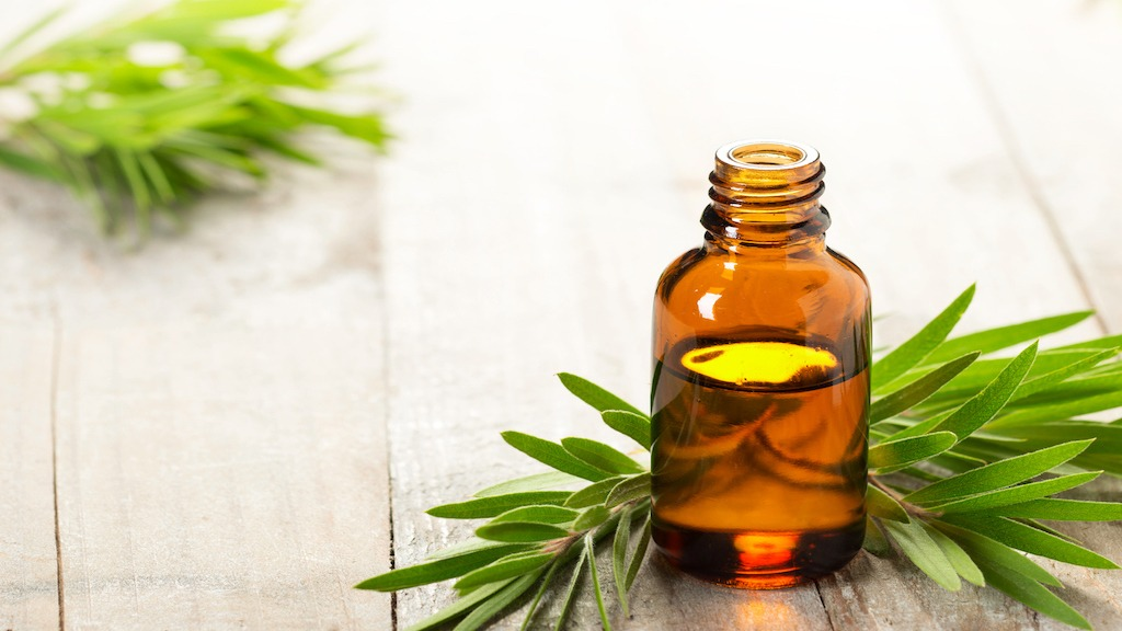 The Wonders of Tea Tree Oil, a.k.a. Melaleuca Tree Oil