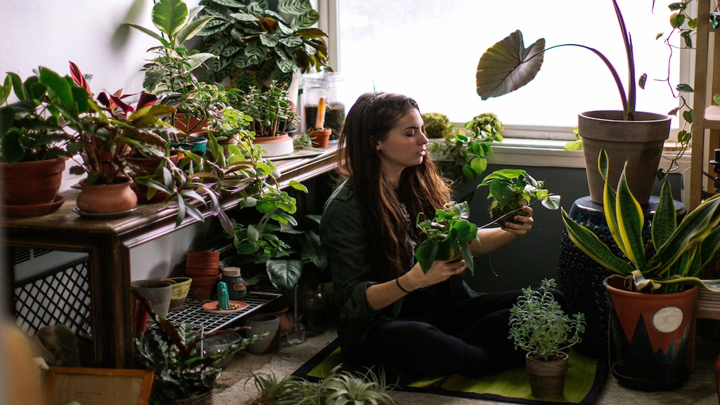 Plant Consciousness; Do Plants Sense, Feel, and Communicate?