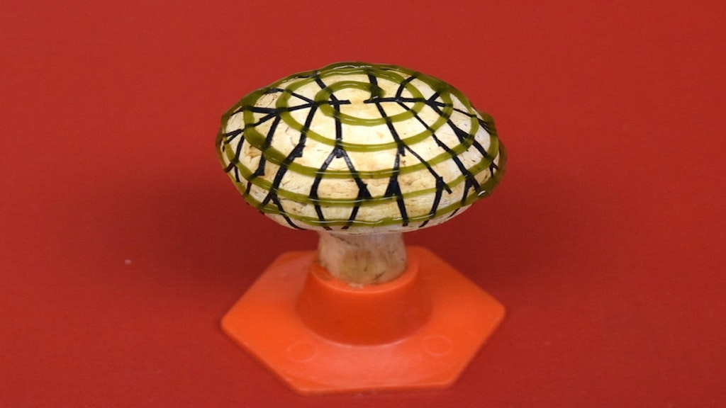 Scientists Used This Mushroom to Generate Electricity From Light